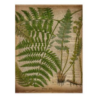 森林群葉のフランスのな植物のプリントのシダ ポストカード