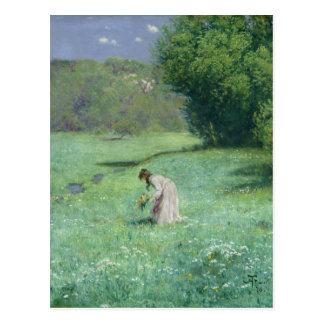 森林草原1876年 ポストカード
