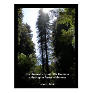 森林荒野のレッドウッド ポストカード