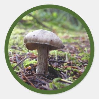 森林菌類 ラウンドシール