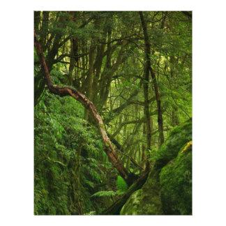 森林 チラシ
