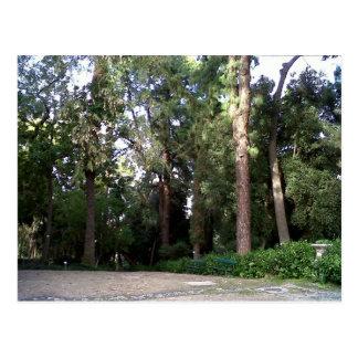 森林 ポストカード