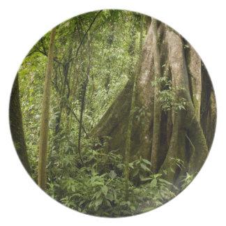 森林、Bosque deパ、コスタリカを曇らせて下さい プレート