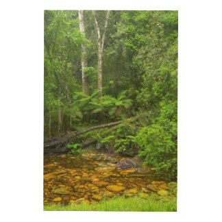 森林、Knysna-AmatoleのMontane森林 ウッドウォールアート