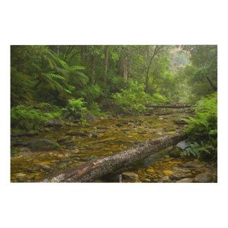 森林、Montane Knysna-Amatoleの蒸気 ウッドウォールアート
