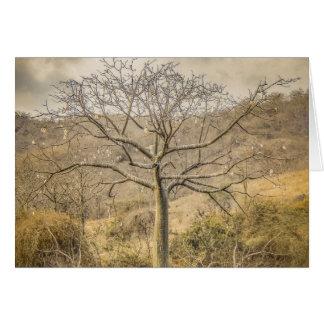 森林Guayasエクアドルのカポックノキ木 カード