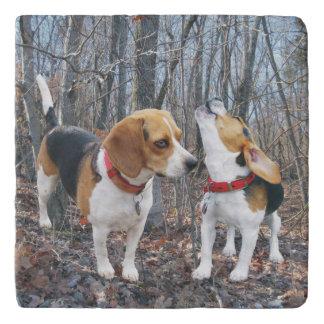 森Trivetのビーグル犬 トリベット