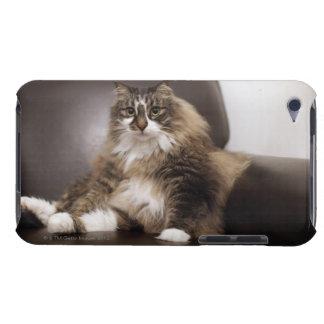 椅子に坐る猫のポートレート Case-Mate iPod TOUCH ケース