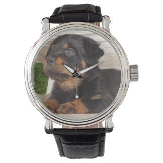 椅子の下に隠れているロットワイラーの子犬 腕時計