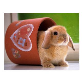 植木鉢のノウサギ ポストカード
