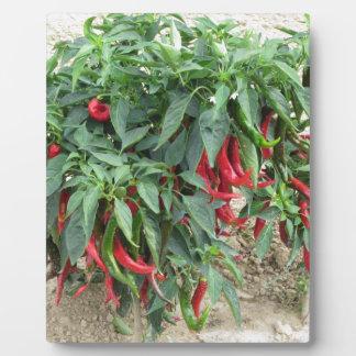 植物でつるす赤いチリペッパー フォトプラーク