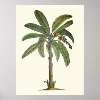 植物のバナナの木 ポスター