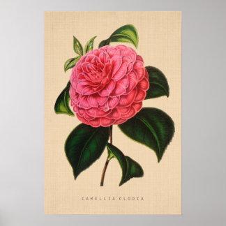 植物のヴィンテージ-ツバキClodia ポスター
