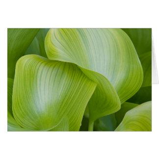 植物の渦巻 カード