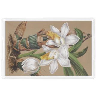 植物の熱帯島の蘭によっては花柄が開花します アクリルトレー