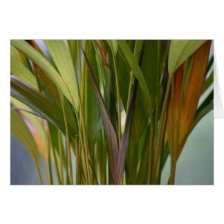 植物の眺め カード