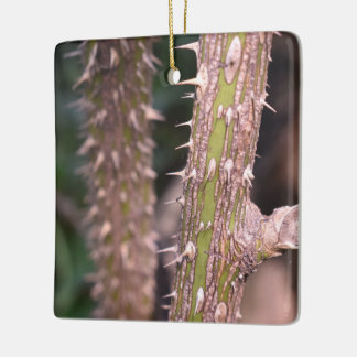 植物の茎のとげの自然公園の写真撮影 セラミックオーナメント