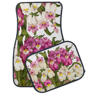 植物の蘭によっては熱帯花柄が開花します カーマット