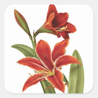 植物の赤いアマリリスのクリスマスの花のヴィンテージ スクエアシール