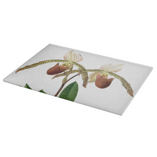 植物のLadysのスリッパ蘭によっては花柄が開花します カッティングボード