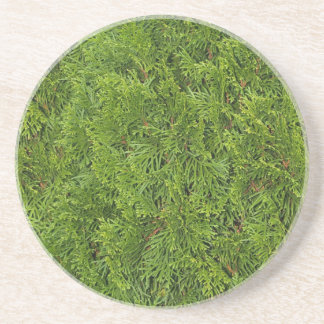 植物または花シリーズ---ヒマラヤスギのブッシュのコースター コースター