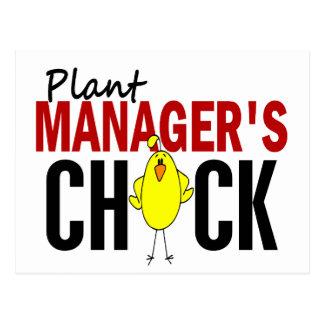 植物マネージャーのひよこ ポストカード