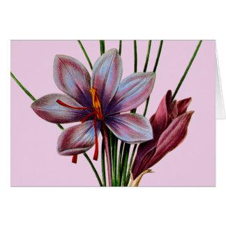 植物学: サフラン カード