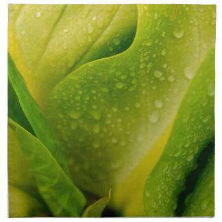 植物相ドミニカ3 ナプキンクロス