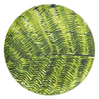 植物相ドミニカ5 プレート