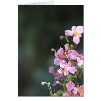 植物相 カード