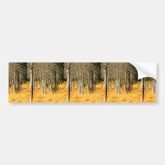 《植物》アスペンの森のバンパーステッカー バンパーステッカー