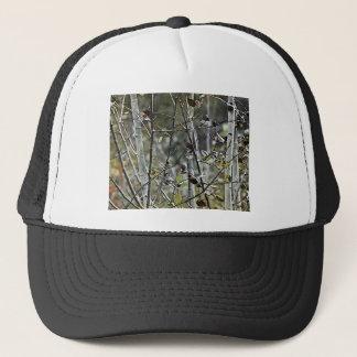 《植物》アスペンの森林 キャップ