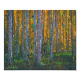《植物》アスペンの森林 フォトプリント