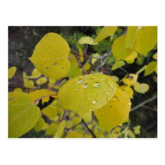 《植物》アスペンの雨滴 ポストカード