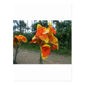 植物、コスタリカの花。 ポストカード