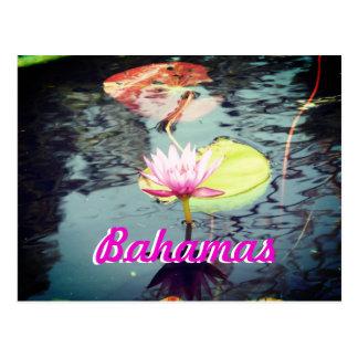 《植物》スイレンおよびはすバハマ ポストカード
