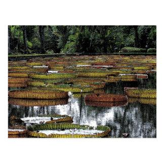 《植物》スイレンの池 ポストカード
