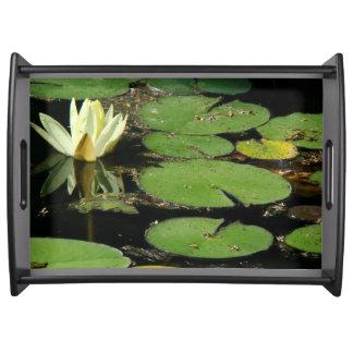 《植物》スイレンの花水庭の池のトレイ トレー
