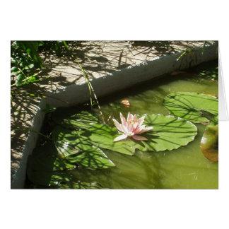 《植物》スイレン カード