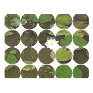 《植物》スイレン、カードCircles2 ポストカード