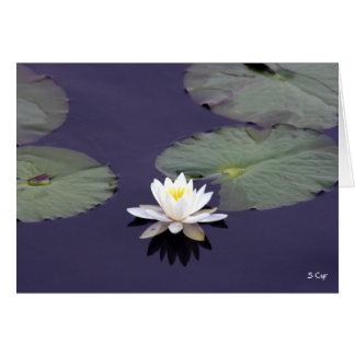 《植物》スイレン、S Cyr カード