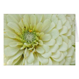 《植物》百日草2 カード