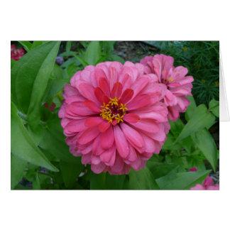 《植物》百日草 カード