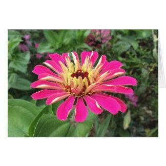 《植物》百日草-鮮やかなピンクおよびクリーム色- カード