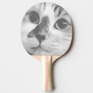極度のかわいい子ネコ猫のポートレート 卓球ラケット