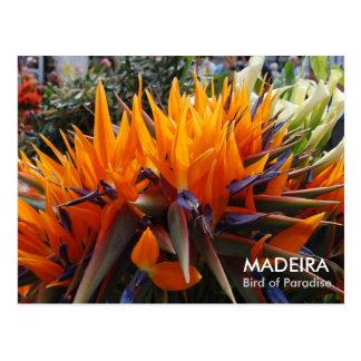 極楽鳥、マデイラ ポストカード
