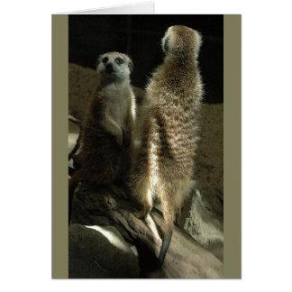 構成する時間! Meerkats カード