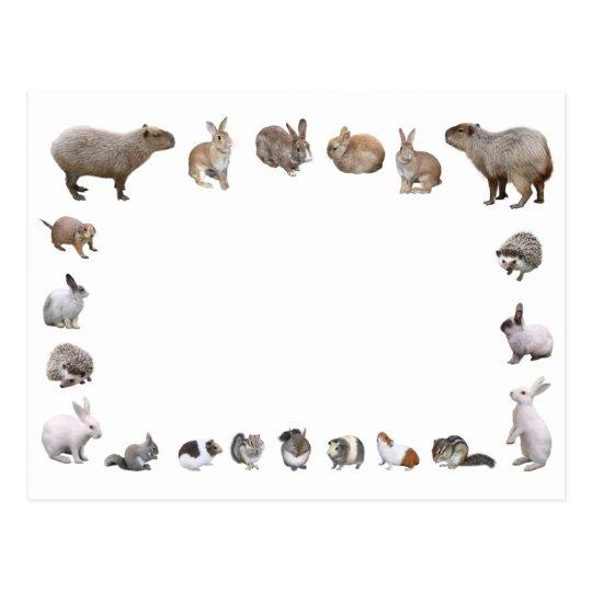 様々な小動物 ポストカード