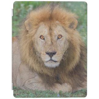 横になっているオスのライオン iPadスマートカバー