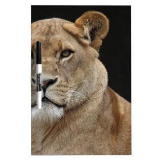 横になっているライオンの女性 ホワイトボード